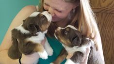 Some of the things we adore about the Intelligent Australian Shepherd Dogs Australian Shepherd Puppies, Aussie Puppies, Australian Shepherds, Dog Agility, Yoga, Working Dogs, Boston Terrier, Aussies, Wave