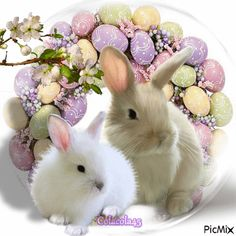 Most popular Picmix [p. 3 on Happy Easter Gif, Easter Art, Gifs, Glitter Graphics, Cute Animals, Animation, Creative, Happy, Happy Easter