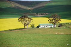 Overberg - Western Cape - South Africa Beauty Around The World, Rest Of The World, Around The Worlds, Beaches In The World, Countries Of The World, Le Cap, Old Farm Houses, Country Art, Landscape Photos
