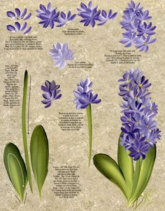 one stroke reusable teaching guides | One Stroke Hyacinth & Water Lily Teaching Guide Packet by Folk Art
