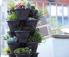 vertical plants - Google Search