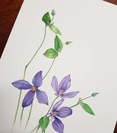 #완성작~~ #클래마티스 #수채화#꽃그림#꽃#그림#미술#취미미술 #성인미술 #남양주취미미술 #artclass #art#artwork #watercolor #drowing #flower