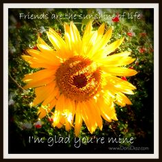 sunflower quotes about friends | Tiny Sunflower, Friends Necklace- Friendship Quote Card