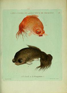 Histoire naturelle des dorades de la Chine Paris :[s.n.],1780