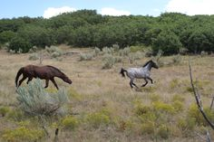 Pictures of the Wild Mustangs - Friendsofthemustangs.org #SaveAmericasMustangs