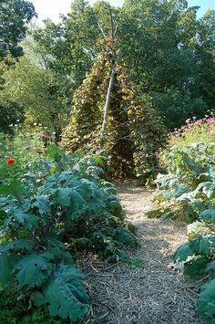 Planning a Kid's Vegetable Garden