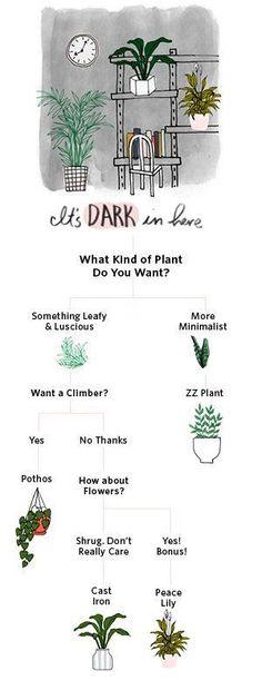 Shop ZZ Plants Are T