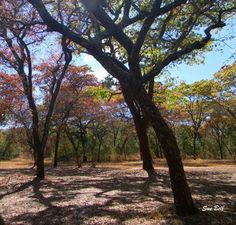 The beautiful trees of Rhodesia Amazing Photos, Cool Photos, Zimbabwe Africa, African Tree, All Nature, Places Of Interest, South Africa, Beats, Country Roads