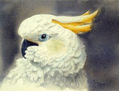 by Martine Vanparijs Watercolor Bird, Watercolor Animals, Watercolor Paintings, Animal Totems, Cockatoo, Bird Art, Artist At Work, Art Forms, Painting Inspiration