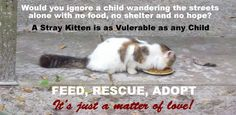 Donations | Ocala Kittens for Adoption – Whispurring Woods Rescue