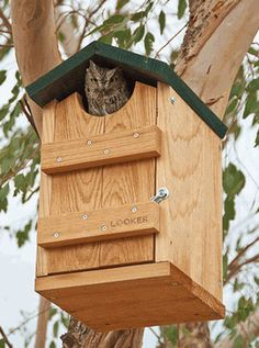 Screech Owl House - bird feeders - BuilderDepot, Inc.