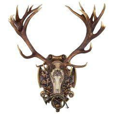 German Red Stag from Eulenburg Hunt of 1892 with Original Fürst-Pless Hunt Horn: