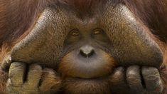 Смешные фото животных http://classpic.ru/blog/smeshnye-foto-zhivotnyh.html   Никто не умеет так поднимать настроение, как братья наши меньшие. Даже в самый пасмурный день их забавные фото заставляют улыбнуться:...