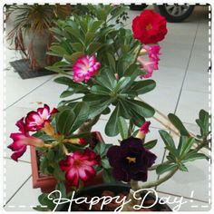 Cores variadas, rosas do deserto perfeitas!!!♥