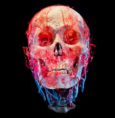 Bodies & Skulls is a series of still-life images featuring preserved human skulls, bodies and various internal organs. By James Bareham, pho...