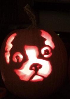 Boston Terrier Carved Pumpkin
