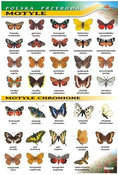 Nature Animals, Animals And Pets, Primary Teaching, English Vocabulary, Learn English, Biology, Montessori, Art For Kids, Insects