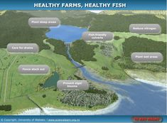 Healthy farms, healthy fish - INTERACTIVE Learn how farms can keep waterways healthy for those downstream and for our precious native freshwater fish, all while benefiting farm health and the farming operation's bottom line. Freshwater Fish, Farms, Fresh Water, Environment, Science, Healthy, Plants, Action, Learning