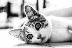thoughtful cat by Roberto Macaluso on 500px