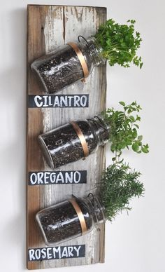 Herbs in hanging mason jars