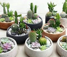 47 How To Make An Indoor Succulent Dish Garden is part of Indoor garden apartment You don& need to purchase accessories that cost a lot of money Trendy succulents are fun and simple to grow, makin - Succulent Arrangements, Cacti And Succulents, Planting Succulents, Cactus Plants, Planting Flowers, Cactus Flower, Succulent Display, Succulent Ideas, Flower Pots
