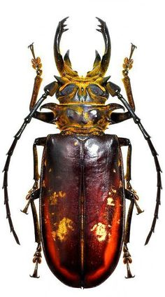 Eotithoes palinii - Caterpillar and insects - Itens para Cães Beetle Insect, Beetle Bug, Insect Art, Cool Insects, Bugs And Insects, Samourai Tattoo, Longhorn Beetle, Instalation Art, Cool Bugs