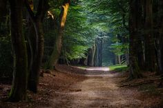 Peaceful-Pathway