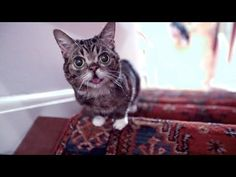 ▶ The Story of BUB's Miraculous Recovery as She RACES UP THE STAIRS - YouTube