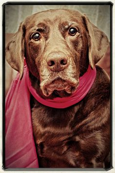"""""""Sporting my new RED scarf!""""  ----  [Photograph by hydecindy (Cindy H) - January 3 2012]'h4d'121021"""
