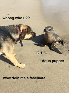 Land pupper and Aqua pupper meet at last http://ift.tt/2roXj0G