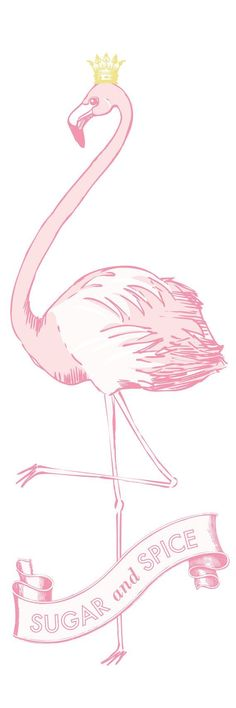 ... and flamingos are nice :)