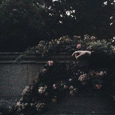 persephone, gray gardens, sylvia plath, midnight garden, so Gothic Aesthetic, Slytherin Aesthetic, Witch Aesthetic, Aesthetic Photo, Aesthetic Pictures, Aesthetic Pastel, Aesthetic Gif, Flower Aesthetic, Aesthetic Vintage