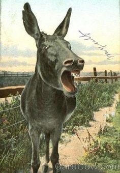 maud-the-mule.jpg (374×540)