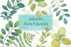 Watercolor leaves and branches by Sunny Illustrations on @creativemarket