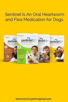 Sentinel  is an oral heartworm medication that is a Beechmont Pet Hospital favorite for preventing heartworms and controlling flea populations and intestinal parasites.