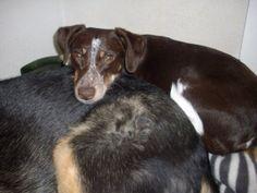 Pully geboren december 2006 zoekt een rustig huisje. Een huisje waar het veilig is en waar de bewoners meer knuffelaars zijn dan wandelaars. Het liefst niet in het bezit van kleine kinderen of katten. Een andere hond geen probleem. In het gastgezin waar ze al geruime tijd logeert, trekt ze zich op aan de andere hond. Voor mannen is zij op haar hoede, neemt niet weg dat zachtaardige mannen uiteraard op haar mogen reageren. Klik op de foto voor meer info.