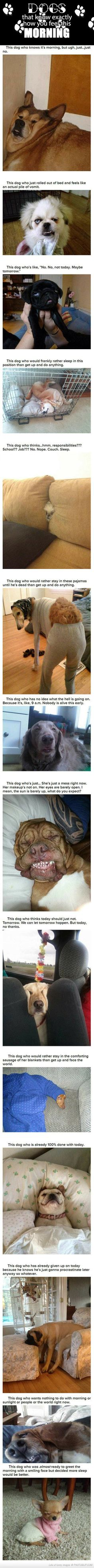 these dogs know exactly how you feel