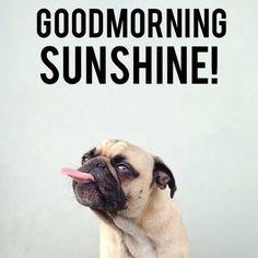 Good morning sunshine!!