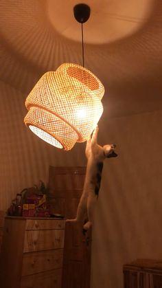 Cute Cat Gif, Cute Funny Animals, Cute Baby Animals, Cute Cats, Funny Cats, Funny Animal Videos, Funny Animal Pictures, Baby Cats, Cats And Kittens