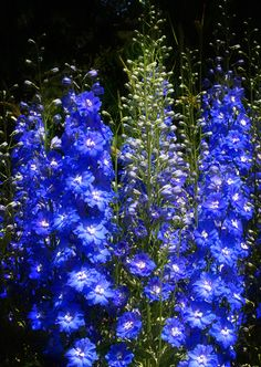 Blue Blue Electric Blue by Moira  Swift on 500px