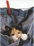 Katzen, Katze, K�tzchen, Cat - Das kostenlose Gif und gratis Clipart Archiv - kostenlos animierte Gifs & gratis Cliparts - Bild - Bilder