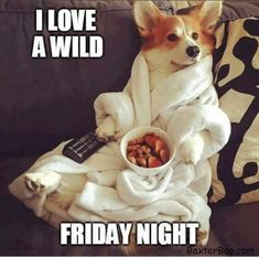 Corgi in a white robe watching tv holding the remote and eating doggy snacks Baby Animals, Funny Animals, Cute Animals, Animal Fun, Animal Memes, Corgi Dog, Dog Cat, I Love Dogs, Puppy Love