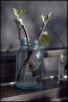 fig cuttings, ditmas park, brooklyn, flatbush dark