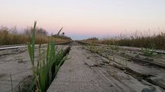 Photo by Dean. Langham SK. Dean, Country Roads, Plants, Pictures, Plant, Paintings, Planting, Planets, Clip Art