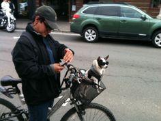 At Seaside Oregon. Seaside Oregon, Maltese, Poodle, Coast, Pets, Poodles, Animals And Pets