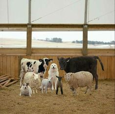 While I do not ever intend to raise cattle or sheep - I do LOVE the dog in the middle of this photo! :)