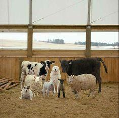 Portretten van dieren op de boerderij. Door fotograaf Rob MacInnis.