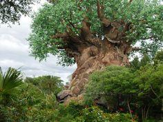 Animal Kingdom at Disney World Resort
