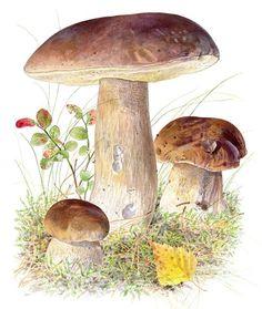 Vielä ehdit metsään: Näin löydät sienet Fungi, Berries, Stuffed Mushrooms, Bird, Vegetables, Fruit, Outdoor Decor, Nature, Plants