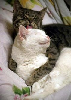 21 Adorable Cats Who Just Want A Hug - BlazePress